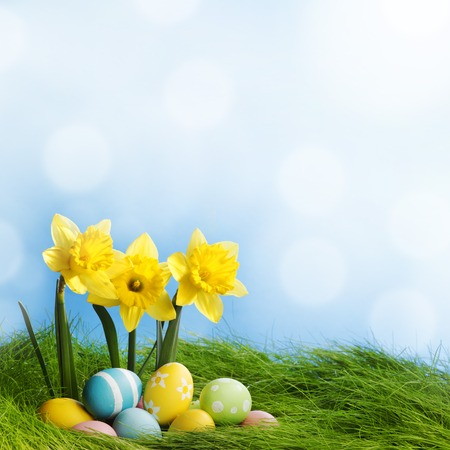 Easter eggs at the foot of a daffodil plant and fresh green grass photo
