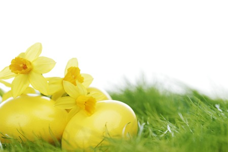 Decorated easter eggs and narcissus in spring grass photo