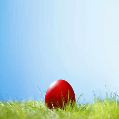 Decorated easter egg in spring grass photo