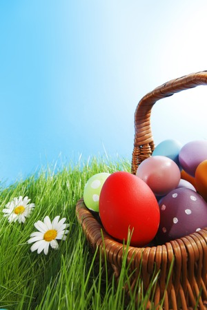 Basket of easter eggs on green grass with camomiles photo