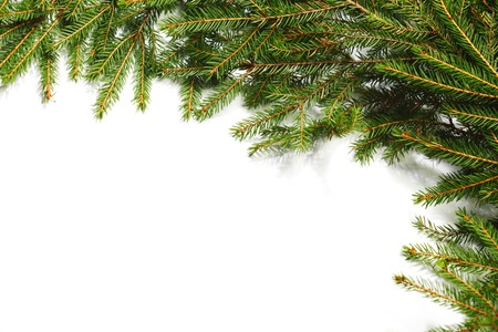 Christmas tree fir frame isolated on white background photo