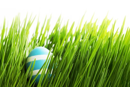 Easter Egg in fresh green grass isolated on white background photo