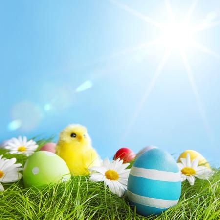 Skład Wielkanoc z jaj i piskląt na zielonej łące