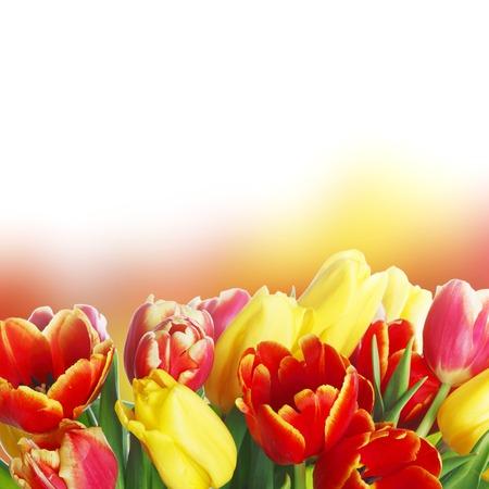 Bouquet of tulips isolated on white background photo
