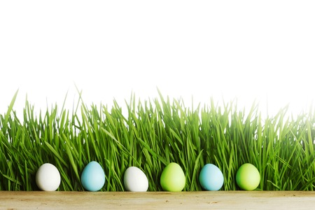 Row of Easter Eggs in fresh green grass isolated on white background photo