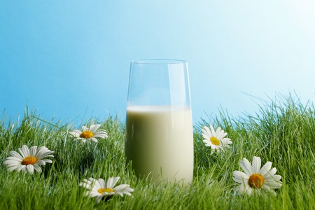 Glass of milk in spring fresh grass with white daisies photo