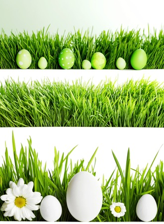 Set of easter eggs in fresh green grass isolated on white background photo