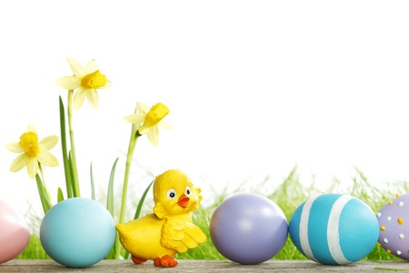 Yellow narcissus Flowers and easter eggs on spring grass background photo