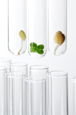 Plant sprout and seeds in test tubes Stock Photo