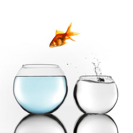 goldfishes: Pesce d'oro saltando da piccolo a grande ciotola Archivio Fotografico