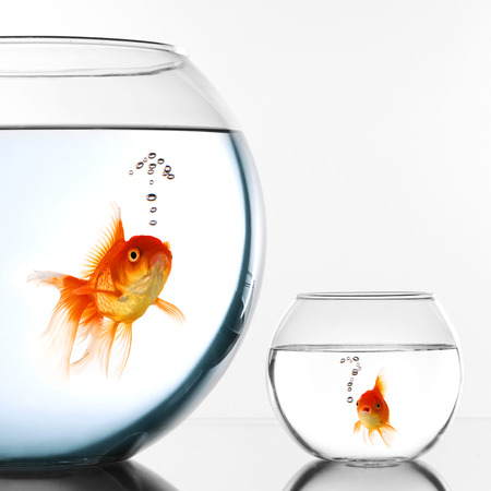 Two Gold fish in aquariums thinking about escape