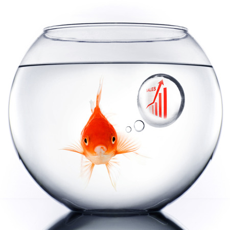 Smart Gold fish in bowl thinking about sales growth photo