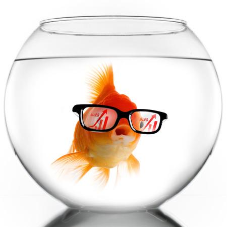 pez dorado: Peces de oro elegante en gafas mirando gráfico de crecimiento de ventas