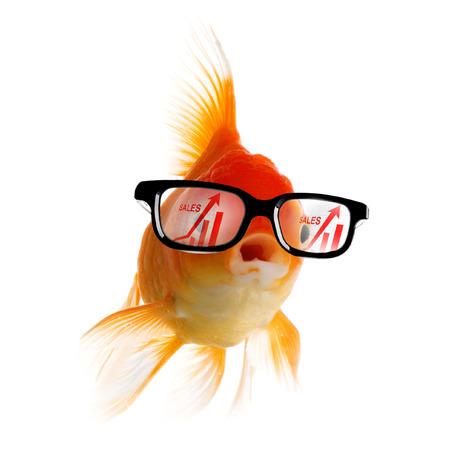 Peces de oro elegante en gafas mirando gráfico de crecimiento de ventas