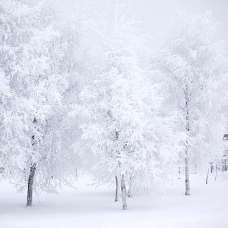 bos van de winter met sneeuw en rijm op bomen
