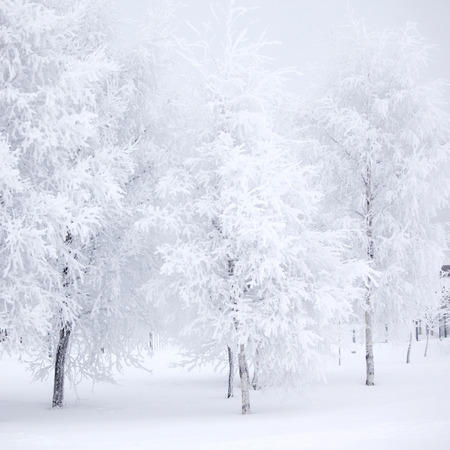 Winter forest with snow and hoar on trees