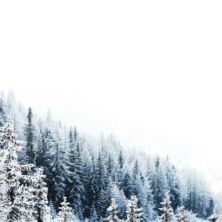 snow covered mountain: Beautiful winter landscape with snow covered mountain forest Stock Photo