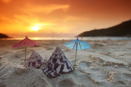 seashell: Seashells on beach under sunset sky over sea Stock Photo