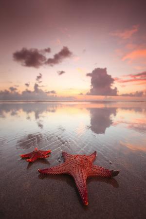 pink skies: Starfish on the beach and beautiful sunset on Bali