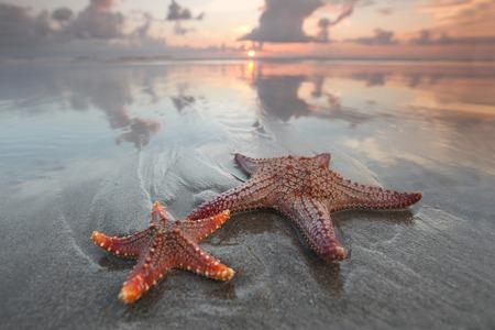 Two starfish on summer beach at sunrise Stock Photo