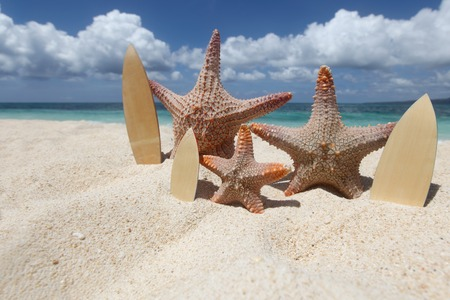 tranquil: Three starfish surfers on sand of tropical beach at Philippines