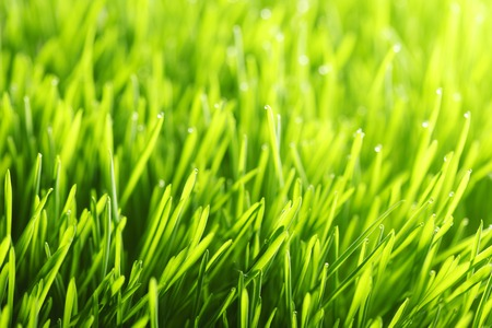 natural backgrounds: Beautiful natural background with fresh spring grass Stock Photo