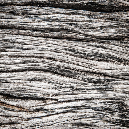 vintage timber: Pattern of old weathered gray wood close up