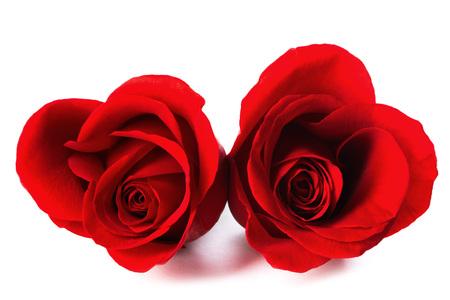 rosas rojas: Dos en forma de corazón rosas rojas aislados sobre fondo blanco, el día de San Valentín
