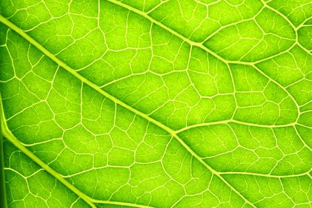 Green leaf background texture macro