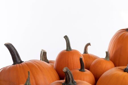Heap of many orange pumpkins on white background , Halloween concept , copy space for text