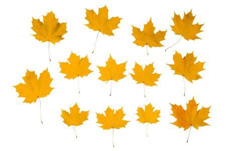 Set of orange autumn maple leaves isolated over white background 写真素材