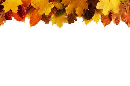 Bunter Herbstlaubrahmen lokalisiert auf weißem Hintergrundkopienraum für Text