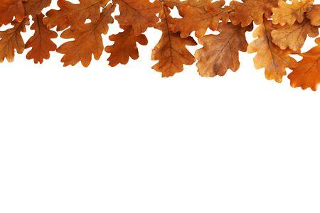 Autumn oak leaves border frame isolated on white background Stockfoto