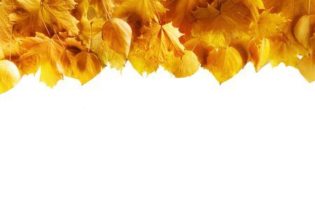 Yellow autumn leaves border frame isolated on white background Stockfoto