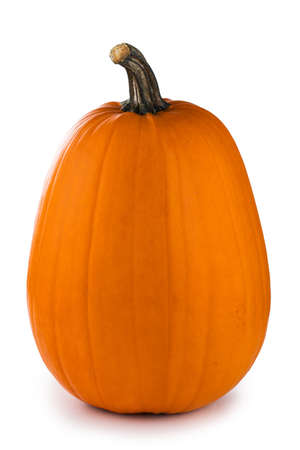 One tall orange pumpkin closeup isolated on white background
