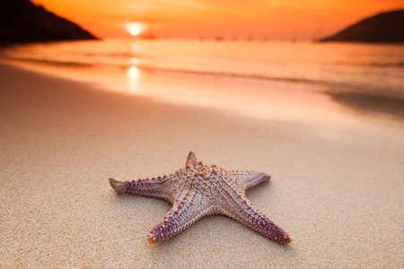 Starfish on beach at sunset, summer vacation concept Foto de archivo