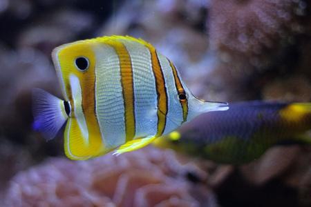 exotics: fish