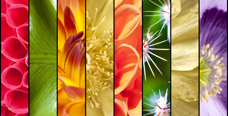 Collage of seasonal flowers in close up separated with black strips photo