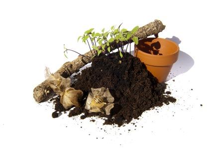 ornated: I giovani talee di sementi di Apple del Per� (physalodes Nicandra, Zegekruid) cresce un mucchio di terreno ornato con vasi di terracotta, un ramo di legno e capsule
