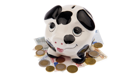 cash cow: Piggy bank with black and white cow spots, looking upwards and standing on a bed of Euro banknotes and coins, isolated in white
