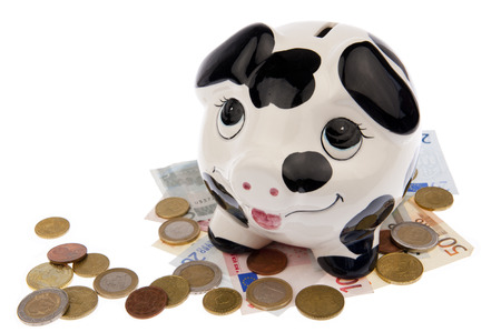 Piggy bank with black and white cow spots, looking upwards and standing on a variety of Euro banknotes and coins, isolated in white  photo