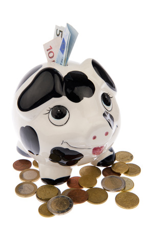 Piggy bank with black and white cow spots, looking upwards and standing in a variety of Euro coins with banknotes in its slot, isolated in white  photo