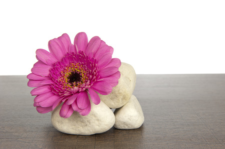 Pile of white rocks on a dark brown wooden shelf decorated with pink gerbera photo