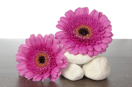 Stack of white stones with pink Gerberas on a dark brown wooden shelf photo