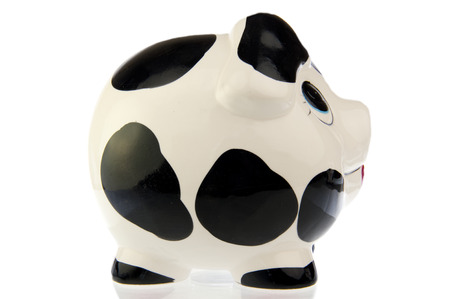 Pig with black and white cow spots, right side look, isolated in white background photo