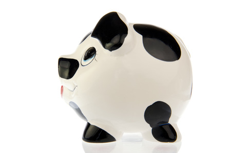 cash cow: Pig with black and white cow spots, left side look, isolated in white background