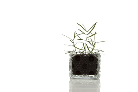 spunky: Sparky crystal glass flask with decorative facet structure and plant