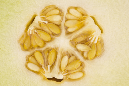 The kernel of a yellow melon in closeup  photo