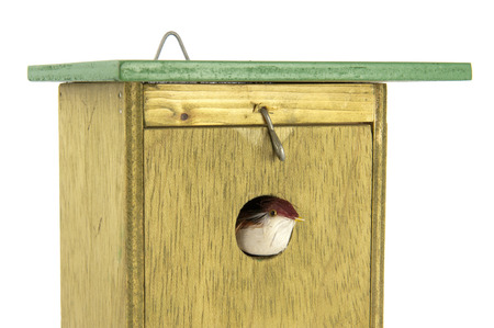 exiting: Tomtit exiting handmade wooden nesting box Stock Photo