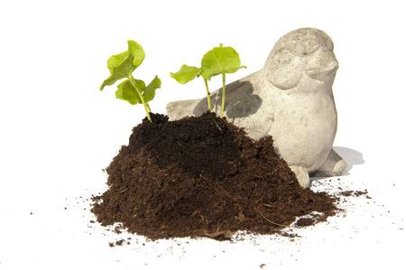 ornated: I giovani talee di sementi della Hibiscus crescere senza un mucchio di terreno ornato con un uccello di pietra Archivio Fotografico
